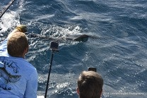Sailfish release on unbelievable
