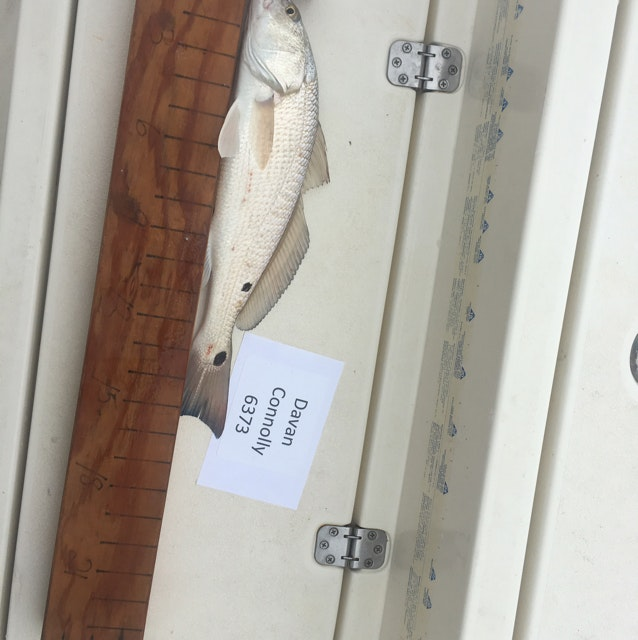 Redfish day 1 connolly