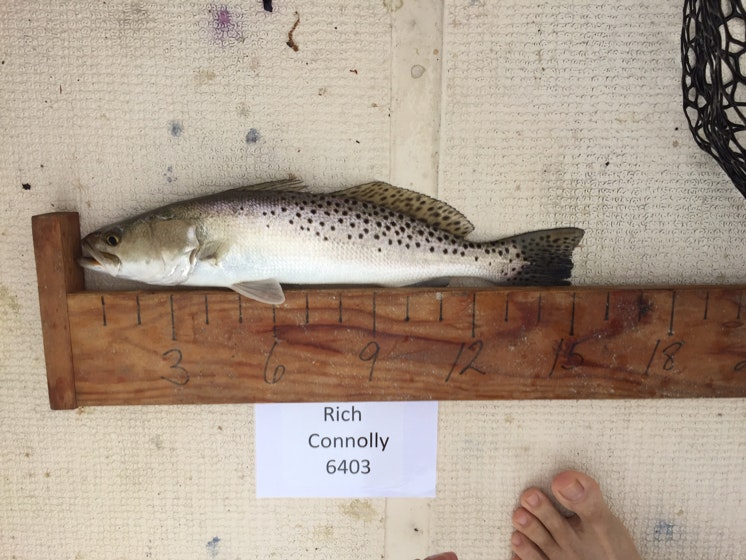 Trout day 1 connolly