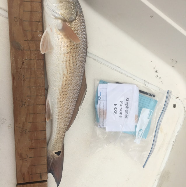 Redfish day 1 parsons
