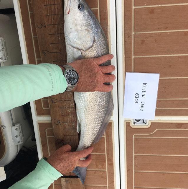 Redfish day 1 lane