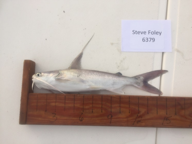 Catfish day 1 foley
