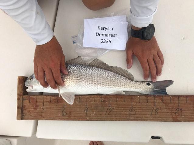 Redfish day 2 demarest